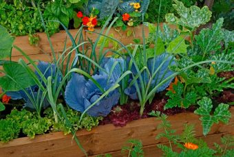 National Gardening Week - Love Your Guts latest blog and FREE seeds to get you started